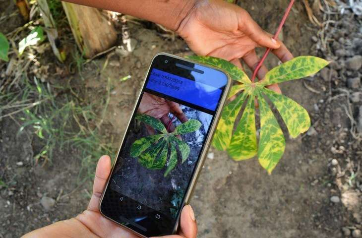 Mobile App To Battle Rapacious Crop-Eating Pest In Africa