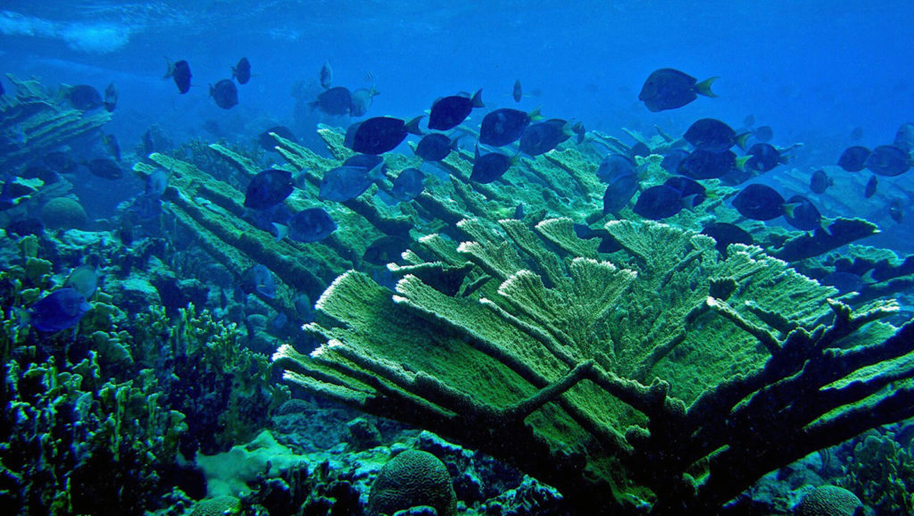 A New Research Study Discovers That MPAs Can Benefit Coral Reefs