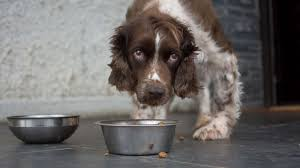 FDA Warns About Dog Food Brands With High Toxicity Levels Of Vitamin D